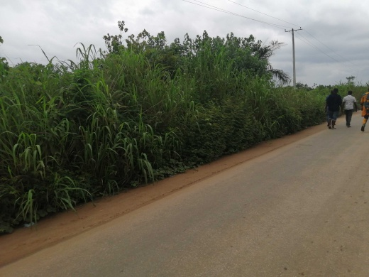 Over 200 plots for sale